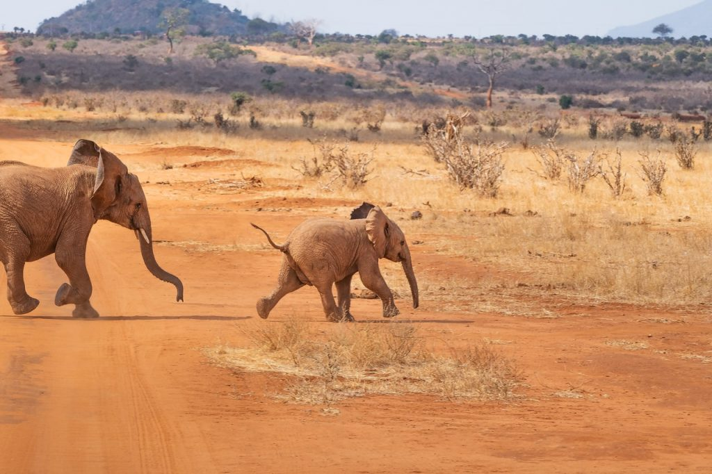 safari, elephant, landscape