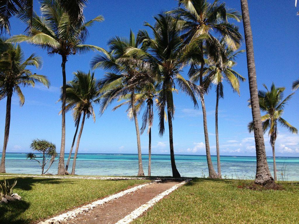 zanzibar, sea, palms